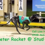 Peter Rocket @ Stud