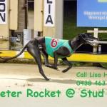 Peter Rocket @ Stud