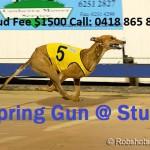 Spring Gun @ Stud