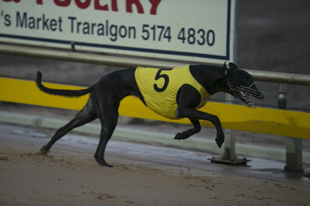 It's A Fling wins the Traralgon Distance Cup