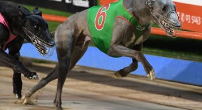 Bolt from the 'Blue' targets Traralgon glory